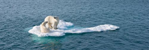 ScaleWidthWyI0ODAiXQ-WWF-changement-climatique-klimaatverandering-header2