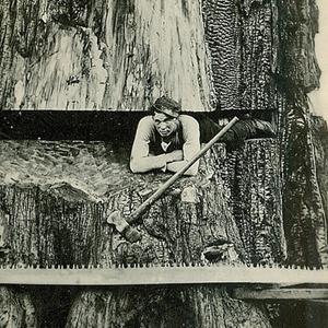 VIGNETTE_gros-arbre-coupe-10