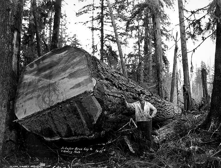 gros-arbre-coupe-01