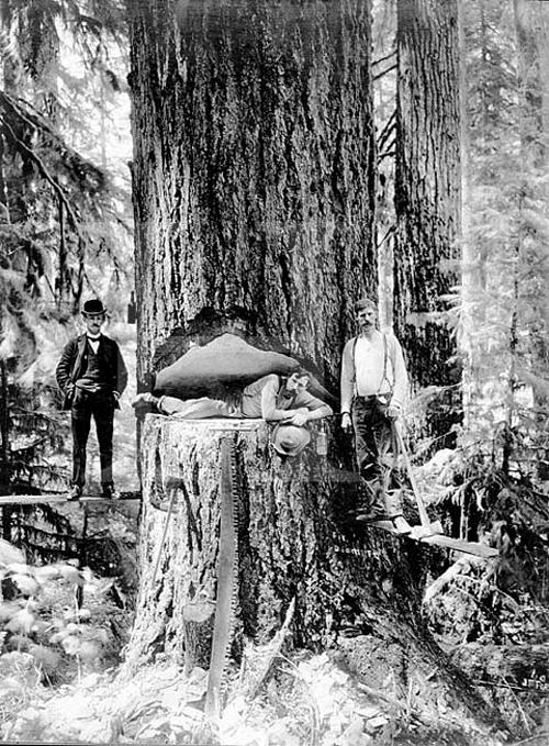 gros-arbre-coupe-19