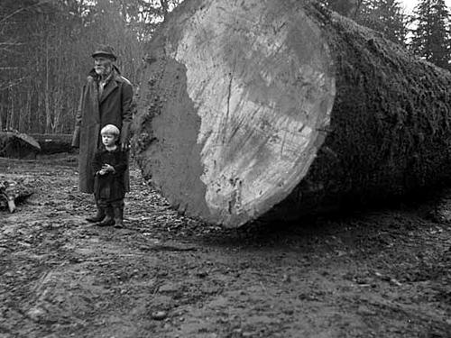 gros-arbre-coupe-33